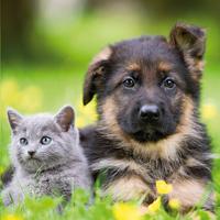 Ravensburger 3-in-1 puzzel Honden en katten-Artikeldetail