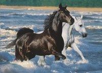 Ravensburger puzzel Paarden op het strand-Vooraanzicht