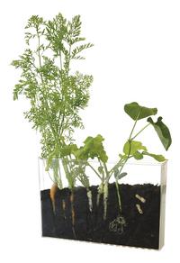 Observatiekit wortels en regenwormen-Afbeelding 1