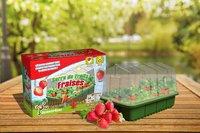 Science4you Serre de Fruits Fraises-Image 1