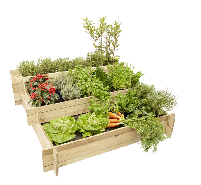 Hillhout carr potager mini garden dreamland for Carre potager design